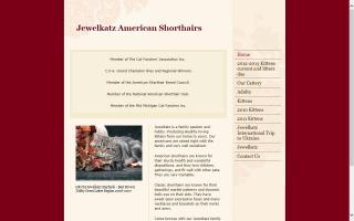 Jewelkatz American Shorthairs