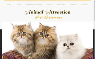 Animal Attraction Pet Grooming / Vanier Persian Cattery
