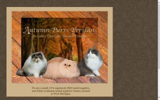 Autumn-Purrs Persians
