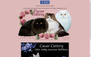 Cacao Cattery