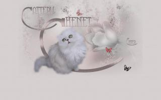 Cattery Chenet