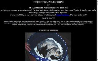 Icecoons Maine Coon Cattery