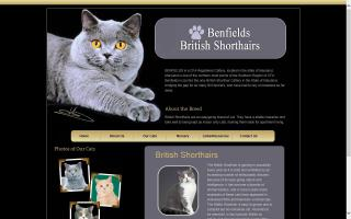 Benfield British Shorthair Cattery