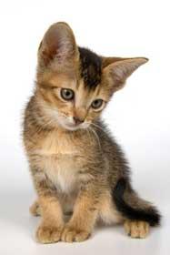Cute kitten in studio