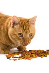 A ginger cat looking around while eating his food
