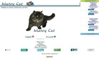 Matey Cat