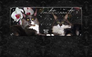 Emilitacoon * LT