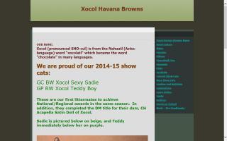 Xocol Havana Browns