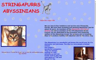Stringapurrs Abyssinians