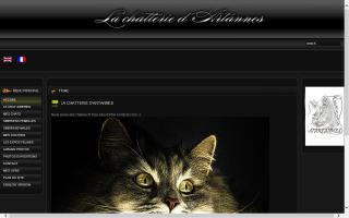 Artannes' Cattery / Chatterie d'Artannes