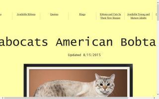 Jabocats Cattery