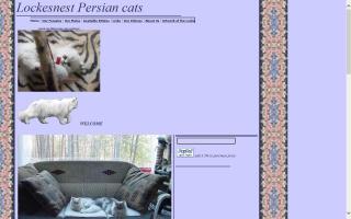 Lockesnest Persian Cats