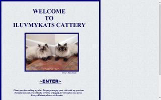 ILUVMYKATS Cattery