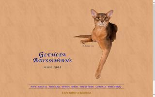 Glenlea Abbysinians