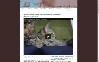 Anson Road Cats