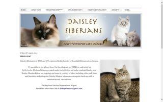 Daisley Siberians