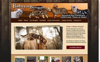 Bahiya Bengal Cats