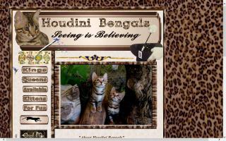 Houdini Bengals