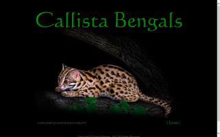 Callista Bengals