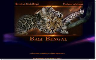 Bali Bengal