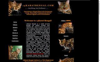 14Karat Bengal Cattery