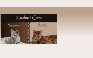 Kashmir Cats
