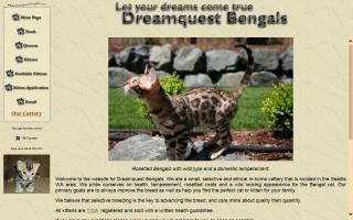 Dreamquest Bengals