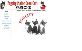 Fog City Maine Coon Cats