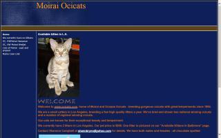 Moirai Ocicats