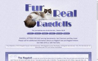 Fur-Real Ragdolls / Above All Ragdolls