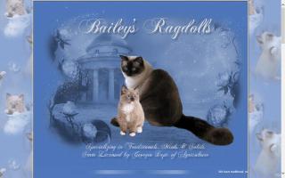Bailey's Ragdolls