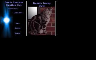Bootsie American Shorthair Cats