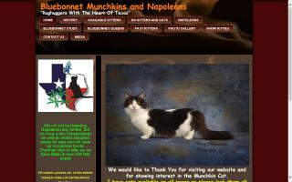 Bluebonnet Munchkins and Napoleons