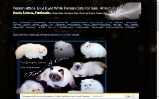 Furr-B Cats