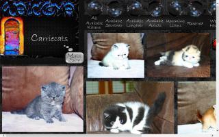 Carriecats
