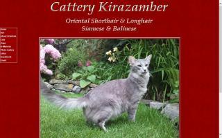 Cattery Kirazamber