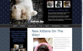 Meow House Kittens