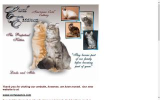 American Curl Cat Breeders Directory - O Kitty!