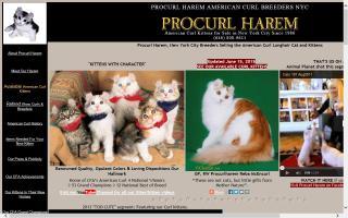 Procurl Harem