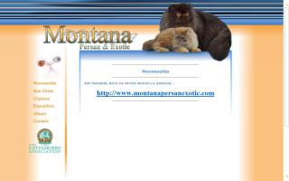 Montana Cattery