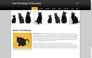 Yash Bombays & Burmese