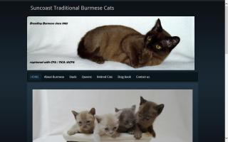 Suncoast Traditional Burmese Cats