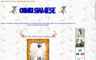Chinki Siamese