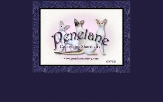 Penelane Colorpoint Shorthairs