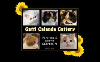 Gatti Calanda