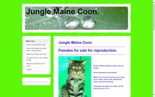 Jungle Maine Coon