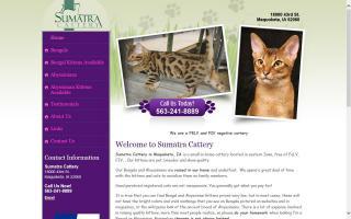 Sumatra Cattery