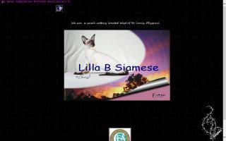 Lilla B Siamese