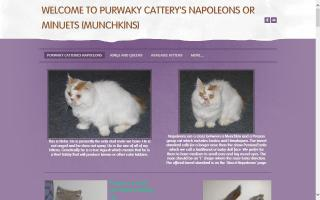 Purwaky Cattery