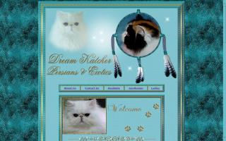 DreamKatcher Perisans & Exotics